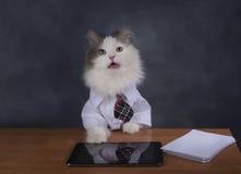 Le directeur de chat manque le bureau image libre de droits