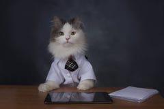 Le directeur de chat manque le bureau photographie stock