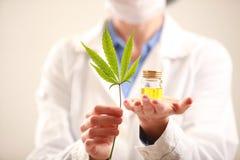 Le docteur de femme tenant un cannabis poussent des feuilles et huilent Médecine parallèle image libre de droits