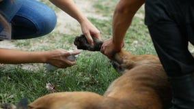 Le docteur dessine un tampon arrêtant le sang de la blessure sur la patte du chien et le traite avec un pulvérisateur clips vidéos