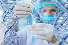Le docteur entreprend l'essai et l'étude de l'ADN photos stock