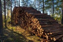 Le domaine du déboisement illégal de la végétation dans la forêt a coupé t photographie stock libre de droits