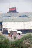 le donne lavorano i sacchi di trasporto del riso Fotografie Stock Libere da Diritti