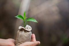 Le donne passano la tenuta delle piantine crescenti nelle borse del suolo fertile, piantanti gli alberi per ridurre il riscaldame fotografie stock libere da diritti