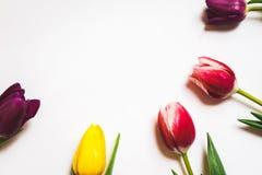 Le donne ` s il giorno fondo dell'8 marzo con la molla fiorisce Fotografie Stock