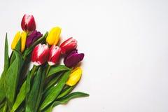 Le donne ` s il giorno fondo dell'8 marzo con la molla fiorisce Fotografia Stock