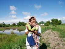 Le donne tailandesi raccolgono il melone di inverno dell'agricoltura o la zucca bianca della cenere a coltiva i raccolti di piant Fotografia Stock Libera da Diritti