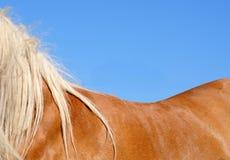 Le dos du cheval contre le ciel bleu Photo libre de droits