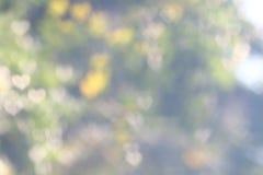 Le doux naturel d'arbre de vert de valentine de fond a brouillé l'éclairage frais de nature de bokeh en forme de coeur pour le wa Photos libres de droits