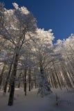 Le Drumont,多雪和晴朗的森林,孚日省,法国 库存图片
