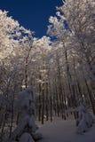 Le Drumont, śnieżny i pogodny, las, Vosges, Francja Zdjęcia Stock