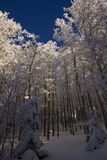 Le Drumont, snöig och solig skog, Vosges, Frankrike Arkivfoton