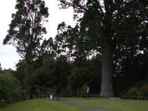 Île du nord Nouvelle Zélande Photos libres de droits