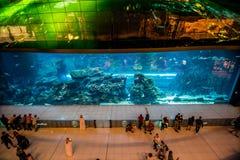 Le DUBAÏ, EAU - octobre 2018 : Aquarium dans le mail de Dubaï - le plus grand centre commercial du monde, Burj du centre Dubaï images stock