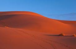 Le dune del deserto di Chebbi di Erg Immagini Stock Libere da Diritti