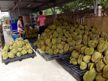 Le durian de cultivateurs de durian prépare pour payer selon le marché photos stock