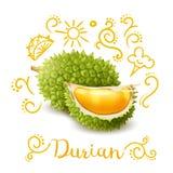 Le durian exotique de fruit gribouille la composition illustration libre de droits