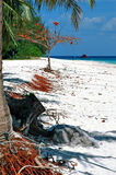 Île en bambou Image stock