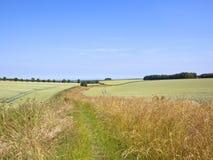 Le erbe asciutte ed i wildflowers dai giacimenti di grano verdi di estate abbelliscono fotografie stock