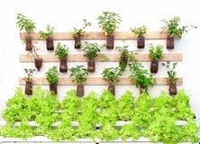 Le erbe della pianta in vasi appendono sulla parete immagine stock libera da diritti