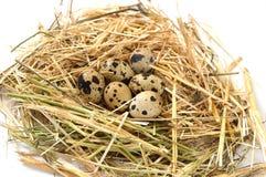 Le erbe e le piante nel ` s della quaglia egg, nido del ` s dell'uccello e le uova, immagini delle uova nel ` s della quaglia ann Fotografie Stock Libere da Diritti