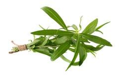 Le erbe fresche del dragoncello, erbe del dragoncello si chiudono su isolato su bianco Immagini Stock Libere da Diritti