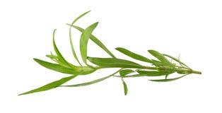 Le erbe fresche del dragoncello, erbe del dragoncello si chiudono su isolato su bianco Fotografia Stock Libera da Diritti