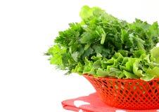 Le erbe fresche della cipolla dell'aneto del prezzemolo dell'erba verde si mescolano Fotografie Stock