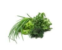 Le erbe fresche della cipolla dell'aneto del prezzemolo dell'erba verde si mescolano Immagini Stock