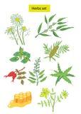 Le erbe hanno impostato le illustrazioni disegnate a mano Immagini Stock