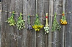 Le erbe mediche fiorisce la raccolta del mazzo sulla parete di legno Immagini Stock