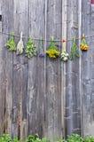 Le erbe mediche fiorisce la raccolta del mazzo sulla vecchia parete di legno Fotografia Stock Libera da Diritti