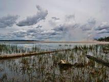 Le erbe paludose si avvicinano al grande geyser del prisma nel parco nazionale di Yellowstone, Wyoming fotografia stock libera da diritti