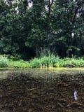Le erbe selvatiche riflettono su un chiaro lago Immagini Stock