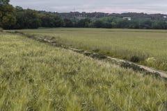 Le erbe verdi sistemano con il modo diagonale del percorso su un paesaggio della natura Fotografie Stock Libere da Diritti