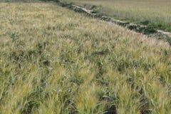 Le erbe verdi sistemano con il modo diagonale del percorso su un paesaggio della natura Fotografie Stock