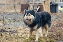 Le esposizioni canine la lingua fotografie stock libere da diritti