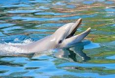 Le för delfin Royaltyfri Fotografi