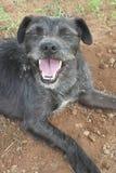 le för hund Royaltyfria Bilder