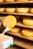 Le fabricant de fromage sélectionne un fromage photographie stock