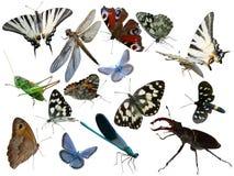 Farfalle, libellula, una cavalletta, altri insetti Immagine Stock