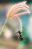 Le farfalle stanno crescendo Fotografie Stock Libere da Diritti