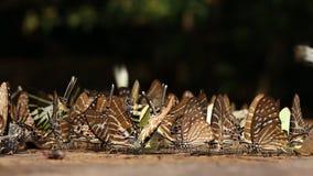 Le farfalle stanno succhiando l'alimento e stanno volando vicino al fiume stock footage