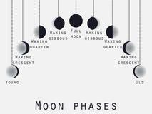 Le fasi della luna Fase lunare Fasi della luna Vettore illustrazione vettoriale