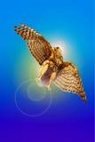 Le faucon-voleur d'une lumière du soleil Image libre de droits
