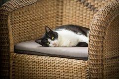 Le fauteuil de chat et d'osier Images stock