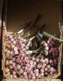 Le faux en plastique fleurit les fleurs colorées Image stock