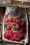 Le faux en plastique fleurit les fleurs colorées Photos libres de droits