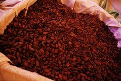 Le fave di cacao Immagine Stock