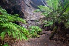 Le felci e le pareti di canyon alla lucciola di Lithgow scavano una galleria in Immagine Stock Libera da Diritti